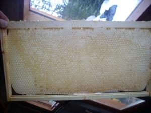 Foundationless honey comb